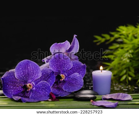 Branch orchid ,candle on pebbles with green plant - stock photo