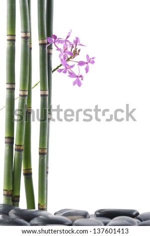 Branch orchid with bamboo grove on pebbles - stock photo