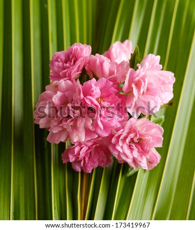 Branch Pink flower and coconut leaf - stock photo