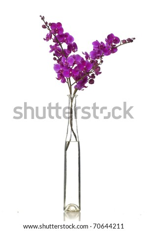 branch pink orchid in vase - stock photo