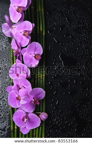 Branch pink orchid with bamboo grove on wet black background - stock photo