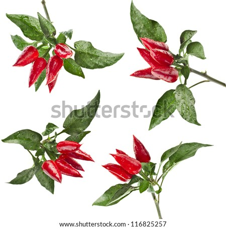 branch red decoration peppers set isolated on white background - stock photo