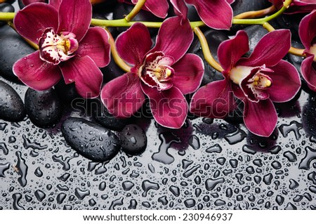 branch red orchid and black pebbles on wet background - stock photo
