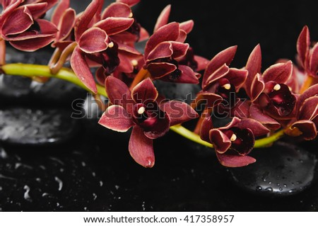 branch red orchid on black pebbles  - stock photo