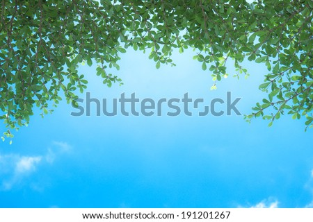 branch tree and blue sky - stock photo