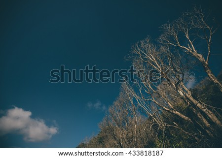 Branch Tree background in Vintage film color tone tuned - stock photo