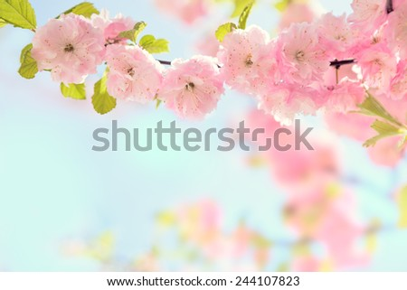 Branch with beautiful pink flowers (Amygdalus triloba).   Very shallow depth of field. Toned image - stock photo