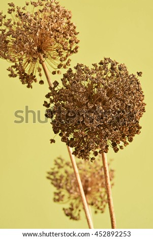 branch with dry leaves - stock photo