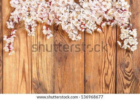 Branch with flowers of an apricot on wood board, for design and your text - stock photo