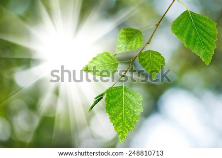 branch with leaves against the sun - stock photo