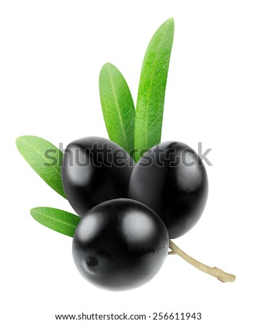 Branch with three black olives isolated on white background, with clipping path - stock photo