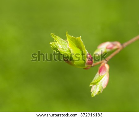 branch with young leaves on a green background - stock photo