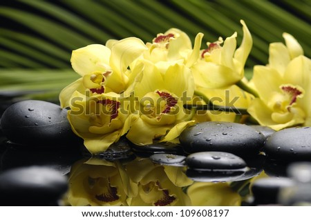 Branch yellow orchid with palm leaf and zen stone - stock photo