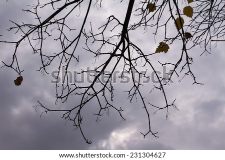 Branches against the gray autumn sky - stock photo