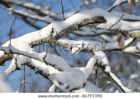 Branches covered by snow - stock photo