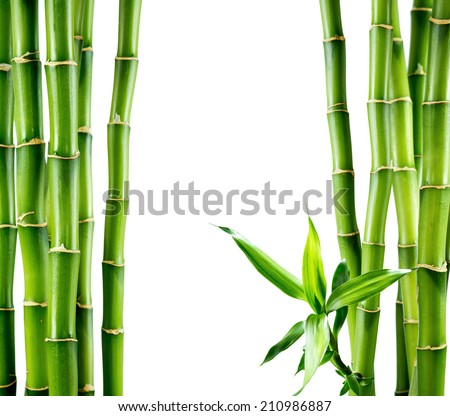 branches of bamboo board - stock photo