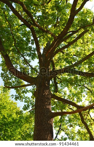 Branches of the oak in autumn forest - stock photo