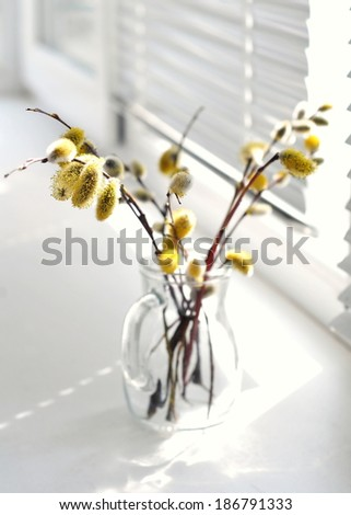 Branches of the pussy willow with flowering bud in vase - stock photo