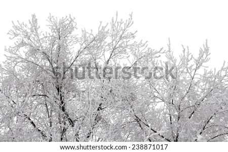 Branches of trees brought by snow isolated on a white background - stock photo