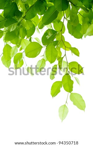 Branches on a white background. - stock photo