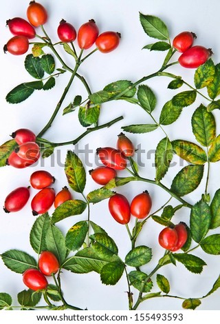 Branches rose hips on a white background - stock photo