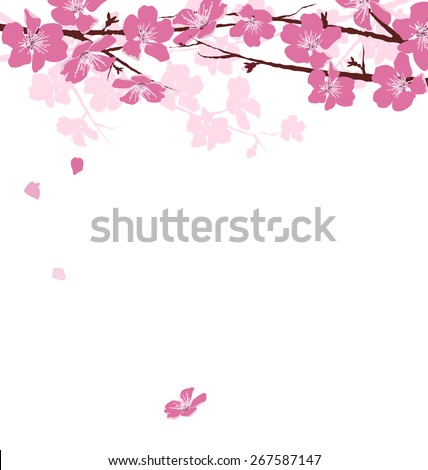 Branches with pink flowers isolated on white background - stock photo