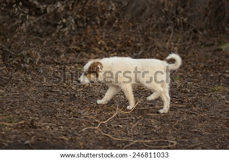 Brave stray puppy in search of mom walking through sinister place - stock photo