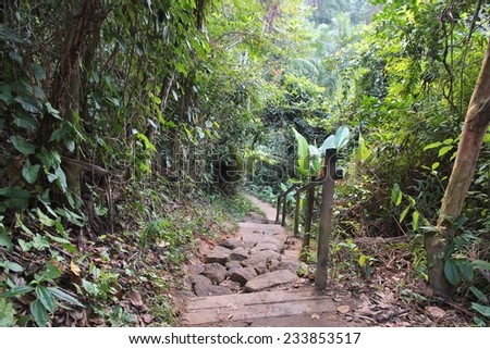 Brazil - hiking trail in Mata Atlantica (Atlantic Rainforest) in Trindade near Paraty. - stock photo