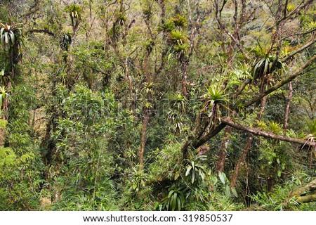 Brazil - jungle in Parana region. Rainforest nature. - stock photo