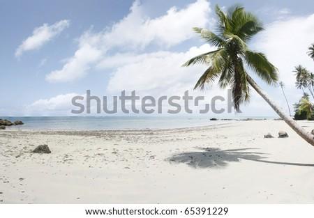 Brazilian ocean beach with a coco palm, Bahia - stock photo