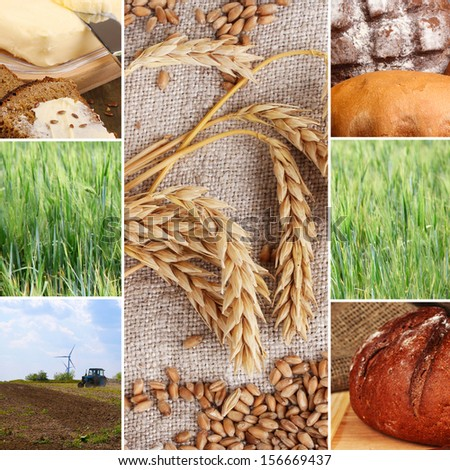 Bread and harvesting wheat collage - stock photo
