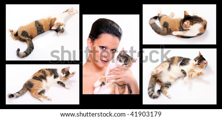 Breeder collection conceptuals images. Cat in different position. - stock photo