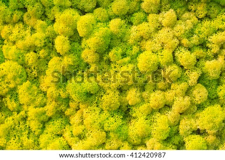 Bricht green moss background - stock photo