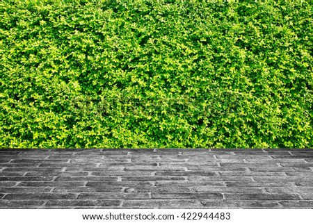brick walkway and tree background. - stock photo