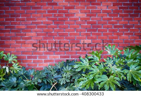 brick wall and plant in bottom - stock photo