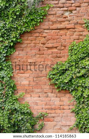 brick wall covered by ivy - stock photo