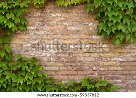 brick wall with copy space framed by Ivy - stock photo