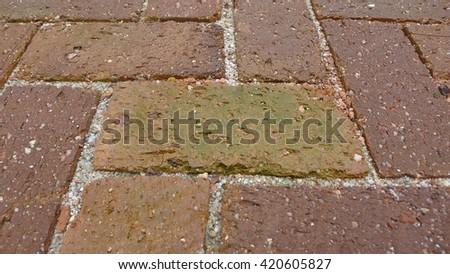 Bricks Floor with ferns, close-up texture - stock photo