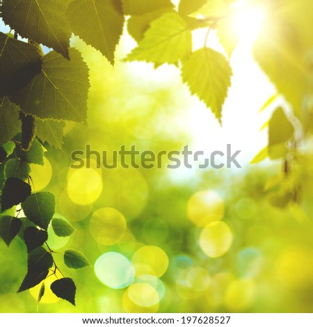 Bright afternoon in the forest, abstract environmental backgrounds with birch foliage - stock photo