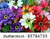 Bright and beautiful colors of plastic flowers. - stock photo