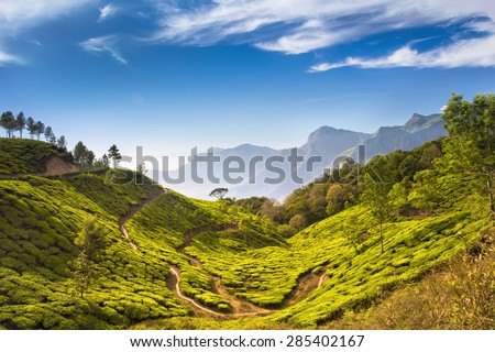 Bright and vivid landscape of green tea plantations in India (Kerala, Munnar). - stock photo