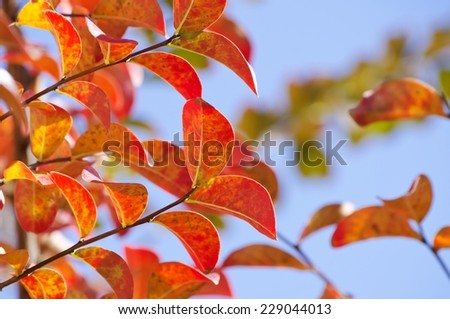 Bright Autumn Tree Leaves in Sunny Day - stock photo