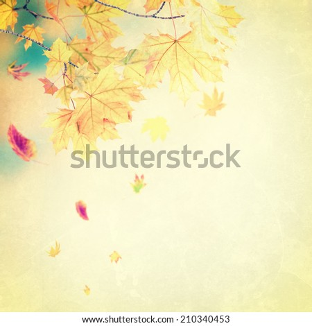 Bright autumn vintage background with foliage - stock photo