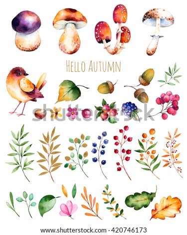 Bright collection with autumn leaves,flowers,branches,berries,acorns,blackberries, mushrooms, chestnut and little bird.Colorful autumn collection with 33 watercolor elements.Autumn bright collection.  - stock photo