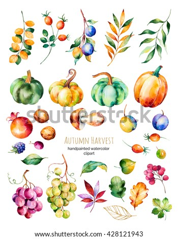 Bright collection with fall leaves,branches,berry,blackberry,mushroom,pumpkins, walnut,grapes vine,prunes and more.Colorful autumn harvest collection with 31 watercolor elements.For your unique create - stock photo
