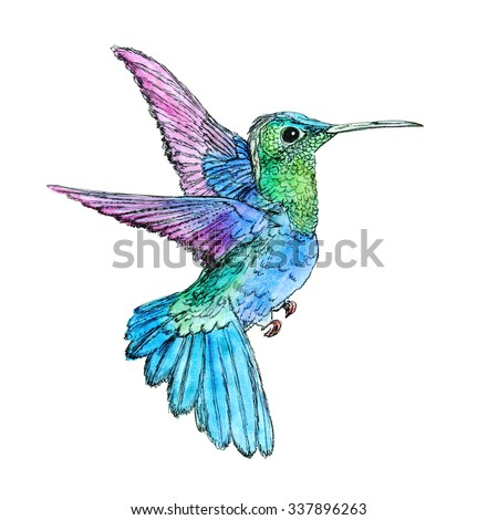 Bright colorful bird hummingbird. Hand drawn watercolor illustration. Isolated on white background. Element for design of invitations, movie posters, fabrics and other objects. - stock photo