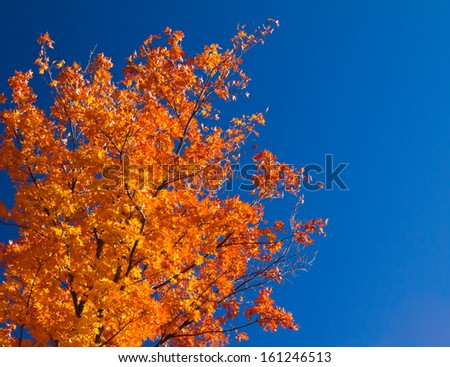 Bright colorful orange fall tree leaves on blue sky background - stock photo