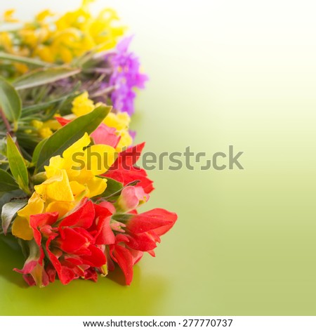 Bright,colorful wildflowers on gradient green background - stock photo