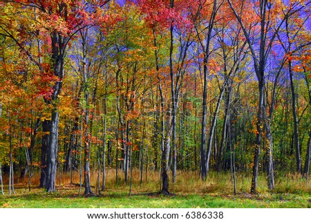 Bright colors during the autumn foliage season - stock photo
