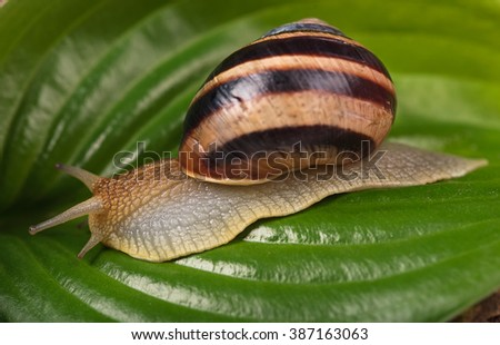 Bright cute snail over green leaf background close-up - stock photo